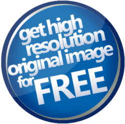 Get a free high definition original photo strip image.